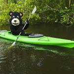 Kayaking Bear 2